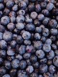 μπλε μούρων Στοκ Φωτογραφίες