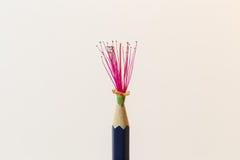 Μπλε μολύβι με το ρόδινο λουλούδι Στοκ φωτογραφία με δικαίωμα ελεύθερης χρήσης