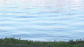Μπλε νερό με τον κυματισμό κοντά στην ακτή του ποταμού απόθεμα βίντεο