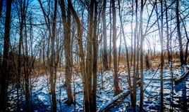 μπλε νεφελώδες πτώσης πεδίων δέντρο ουρανού τοπίων μόνο κίτρινο Στοκ Εικόνα