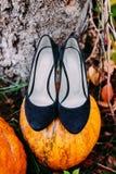 Μπλε νυφικά παπούτσια που στέκονται σε μια κολοκύθα φθινοπώρου γάμος κορδελλών πρόσκλησης λουλουδιών κομψότητας λεπτομέρειας διακ Στοκ εικόνες με δικαίωμα ελεύθερης χρήσης