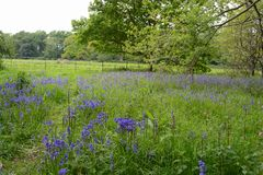 Μπλε ξύλο κουδουνιών Στοκ εικόνα με δικαίωμα ελεύθερης χρήσης