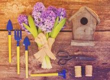 Μπλε οργάνωση υάκινθων και κηπουρικής Στοκ φωτογραφία με δικαίωμα ελεύθερης χρήσης