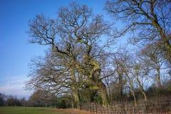 Μπλε ουρανοί σε ένα πάρκο με τα γυμνά δέντρα στοκ φωτογραφία