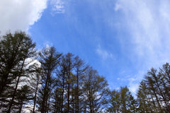 Μπλε ουρανοί στο Hokkaido Στοκ Εικόνα