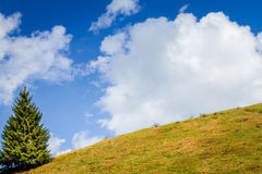 Μπλε ουρανός, άσπρα σύννεφα, πράσινοι τομέας και δέντρο στην άνοιξη Στοκ Εικόνα