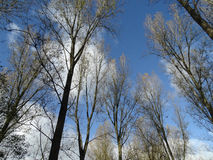 Μπλε ουρανός επάνω από τα δέντρα Στοκ φωτογραφίες με δικαίωμα ελεύθερης χρήσης
