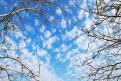 μπλε ουρανός και ξηρός κλάδος δέντρων Στοκ φωτογραφίες με δικαίωμα ελεύθερης χρήσης