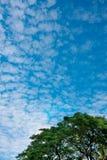 Μπλε ουρανός και χνουδωτά σύννεφα και δέντρα φύλλων στη σύσταση υποβάθρου φύσης Στοκ Εικόνες