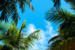 Μπλε ουρανός με μερικούς σύννεφα και φοίνικες Στοκ Φωτογραφία