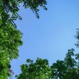 Μπλε ουρανός με τα πράσινα φύλλα Στοκ φωτογραφία με δικαίωμα ελεύθερης χρήσης