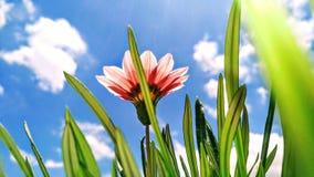 Μπλε ουρανός με την πυράκτωση λουλουδιών Στοκ Φωτογραφία