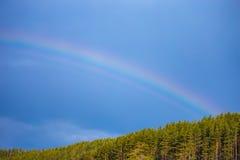 Μπλε ουρανός με το ουράνιο τόξο πέρα από τα δέντρα Πολύ φωτεινό ουράνιο τόξο με το φ Στοκ Εικόνες