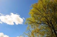 Μπλε ουρανός, μικρό σύννεφο και ένα κίτρινο χρωματισμένο δέντρο Στοκ Εικόνες