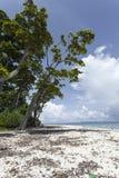 Μπλε ουρανός νησιών Havelock με τα άσπρα σύννεφα, νησιά Andaman, IND Στοκ Εικόνες