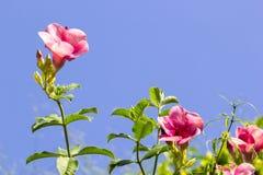 μπλε ουρανός λουλουδ& διανυσματική απεικόνιση
