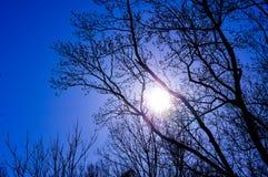 Μπλε ουρανός την πρώιμη άνοιξη Στοκ Φωτογραφίες