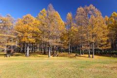 μπλε ουρανός φύλλων φθιν&omi Στοκ φωτογραφία με δικαίωμα ελεύθερης χρήσης