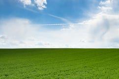 μπλε ουρανός χλόης πεδίων Στοκ φωτογραφία με δικαίωμα ελεύθερης χρήσης