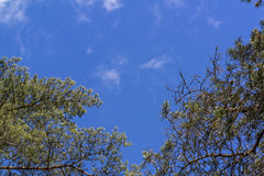 μπλε ουρανός Στοκ Φωτογραφίες