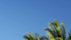 μπλε ουρανός απόθεμα βίντεο