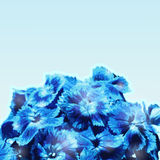 μπλε λουλούδια ανθοδ&epsi Στοκ Φωτογραφίες