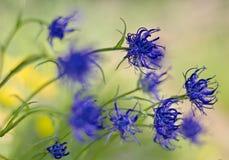 Μπλε λουλούδια βουνών στον αέρα Στοκ φωτογραφία με δικαίωμα ελεύθερης χρήσης