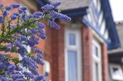 Μπλε λουλούδια ενάντια στο βικτοριανό παράθυρο Μάντσεστερ Αγγλία Ευρώπη Στοκ φωτογραφίες με δικαίωμα ελεύθερης χρήσης