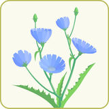 Μπλε λουλούδια ραδικιού Στοκ Φωτογραφία