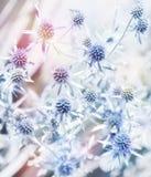 Μπλε λουλούδια Watercolor Στοκ Φωτογραφία