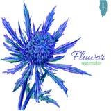 Μπλε λουλούδι, απεικόνιση watercolor που απομονώνεται στο άσπρο υπόβαθρο, διανυσματική συρμένη χέρι απεικόνιση floral απεικόνιση  Στοκ φωτογραφία με δικαίωμα ελεύθερης χρήσης