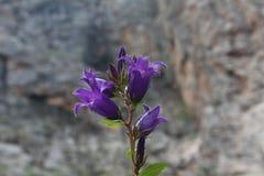 μπλε λουλούδι κουδο&upsi Στοκ φωτογραφία με δικαίωμα ελεύθερης χρήσης