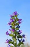 Μπλε λουλούδι πέρα από το μπλε ουρανό Στοκ Φωτογραφία