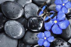 Μπλε λουλούδι, πεταλούδα και μαύρες πέτρες Στοκ Εικόνα