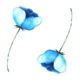 Μπλε λουλούδι που γίνεται το watercolor Στοκ φωτογραφία με δικαίωμα ελεύθερης χρήσης