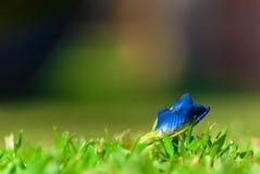Μπλε λουλούδι Στοκ φωτογραφία με δικαίωμα ελεύθερης χρήσης