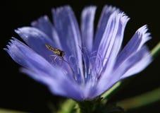 Μπλε λουλούδι Στοκ Φωτογραφίες