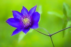 μπλε λουλούδι στοκ φωτογραφίες με δικαίωμα ελεύθερης χρήσης
