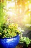 Μπλε δοχείο λουλουδιών πέρα από το ηλιόλουστο υπόβαθρο κήπων Στοκ Φωτογραφία