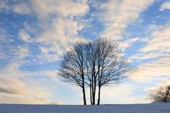 μπλε πέρα από το δέντρο ουρ&al η περιοχή κοντά να κάνει σκι Ελβετία πανοράματος στο χειμώνα Στοκ φωτογραφία με δικαίωμα ελεύθερης χρήσης