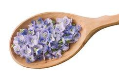 Μπλε πέταλα λουλουδιών κατά μια ξύλινη άποψη κινηματογραφήσεων σε πρώτο πλάνο κουταλιών που απομονώνεται άνωθεν στο άσπρο υπόβαθρ Στοκ Φωτογραφία