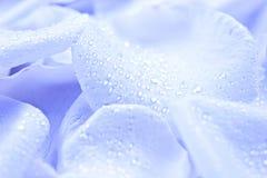 Μπλε πέταλα λουλουδιών Στοκ εικόνες με δικαίωμα ελεύθερης χρήσης