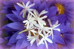 Μπλε πέταλα Lotus με τις πτώσεις του νερού, ναός δοντιών, Kandy, Σρι Λάνκα Στοκ εικόνες με δικαίωμα ελεύθερης χρήσης