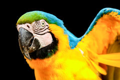 μπλε παπαγάλος πουλιών &kappa Στοκ Φωτογραφίες