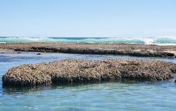 Μπλε παραλία τρυπών στην ακτή κοραλλιών Στοκ Εικόνες