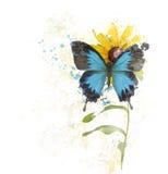 Μπλε πεταλούδα σε ένα λουλούδι Στοκ Εικόνα