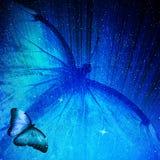 Μπλε πεταλούδα στην μπλε ανασκόπηση Στοκ φωτογραφία με δικαίωμα ελεύθερης χρήσης
