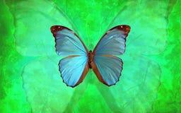 Μπλε πεταλούδα Morpho με το δονούμενο πράσινο υπόβαθρο Στοκ φωτογραφία με δικαίωμα ελεύθερης χρήσης