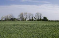 μπλε πεδίων άνοιξη ουρανού χλόης πράσινη Στοκ φωτογραφία με δικαίωμα ελεύθερης χρήσης