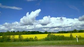 μπλε πεδίων άνοιξη ουρανού χλόης πράσινη Στοκ Φωτογραφίες